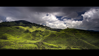 Cameron Highlands Malaisie