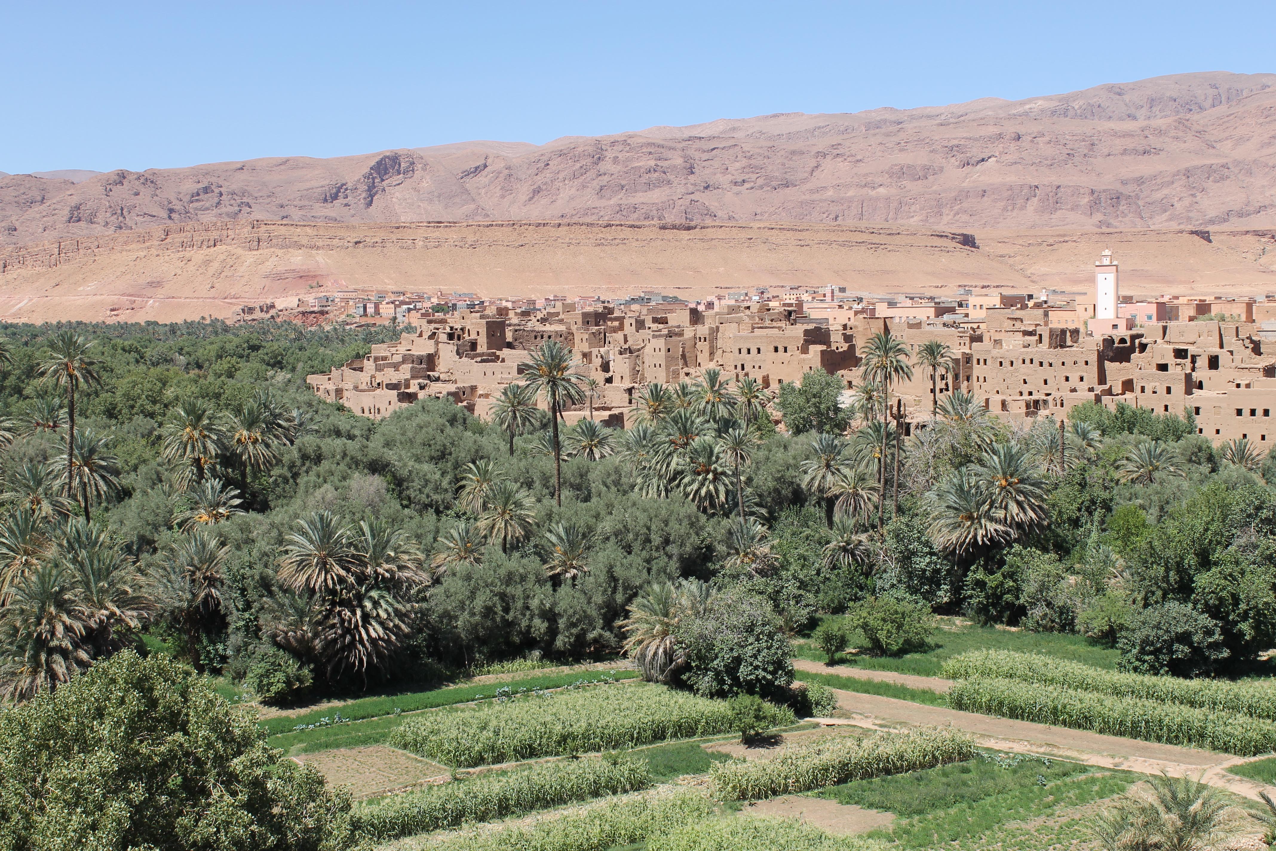 Palmeraie au Maroc