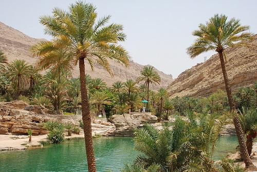 Oasis à Oman