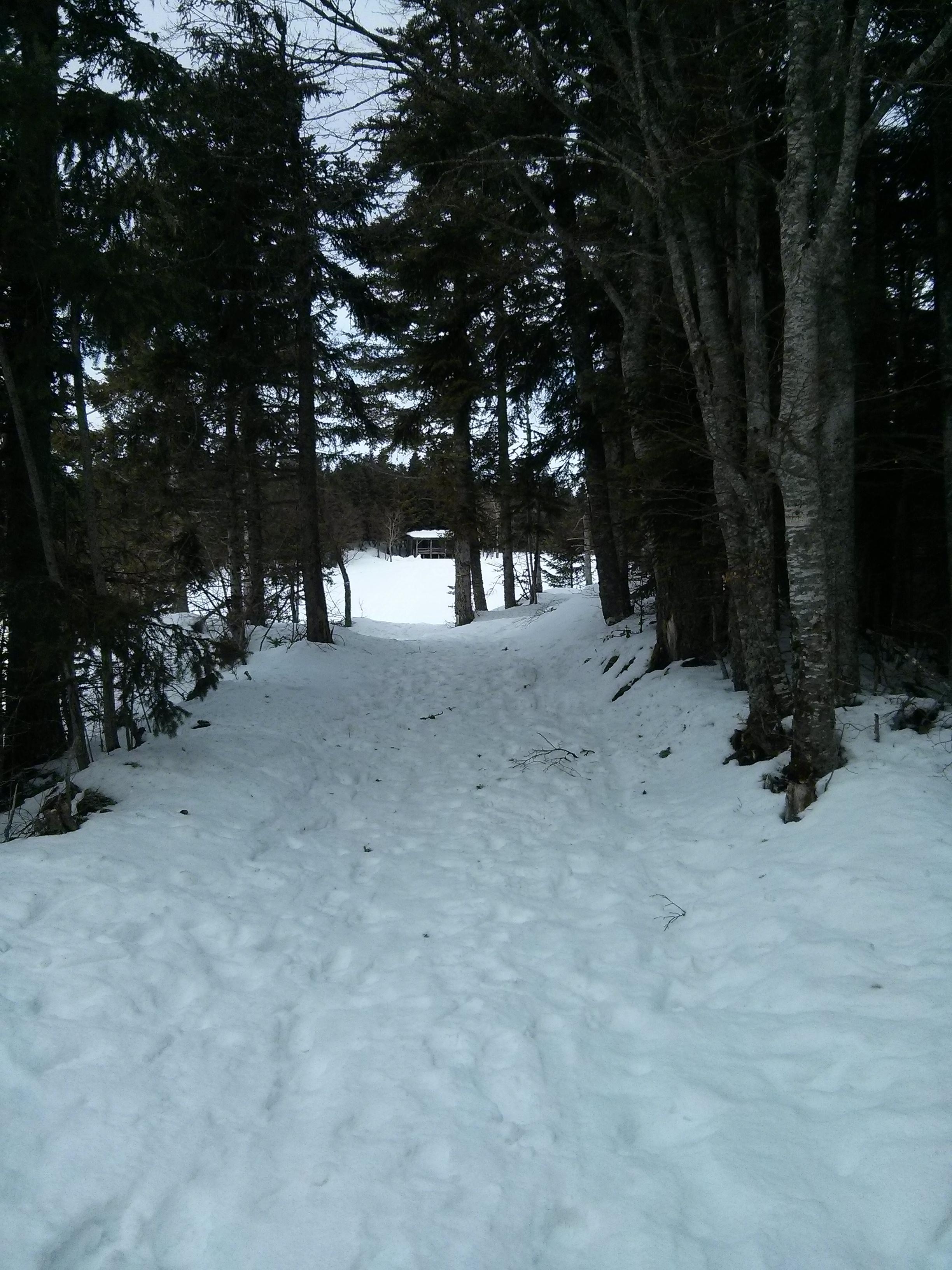 On marche entre les arbres, en direction d'un grand espace et du fameux igloo