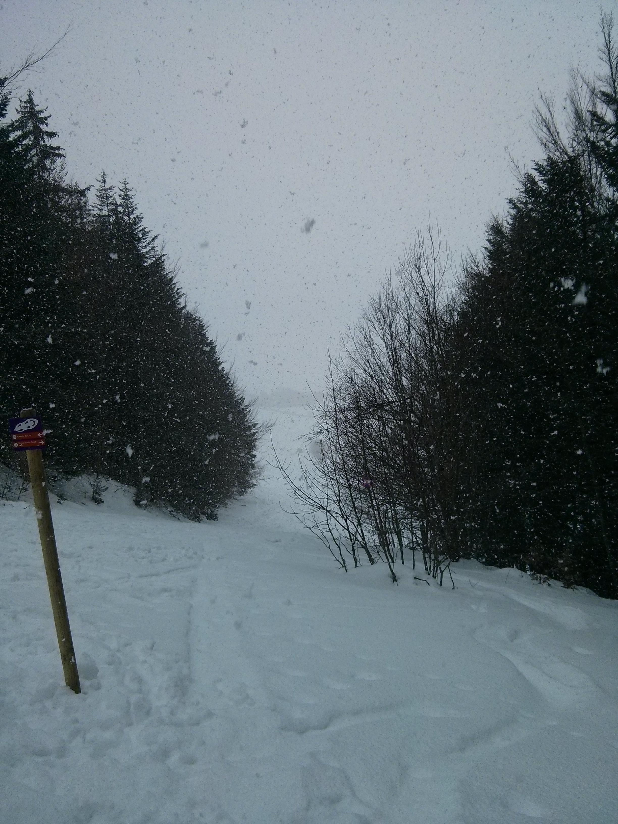 Descente en raquette sous la neige