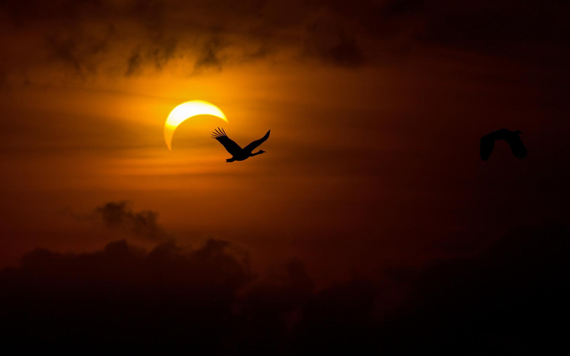Près de l'éclipse, à vol d'oiseaux ! © eweb4.com