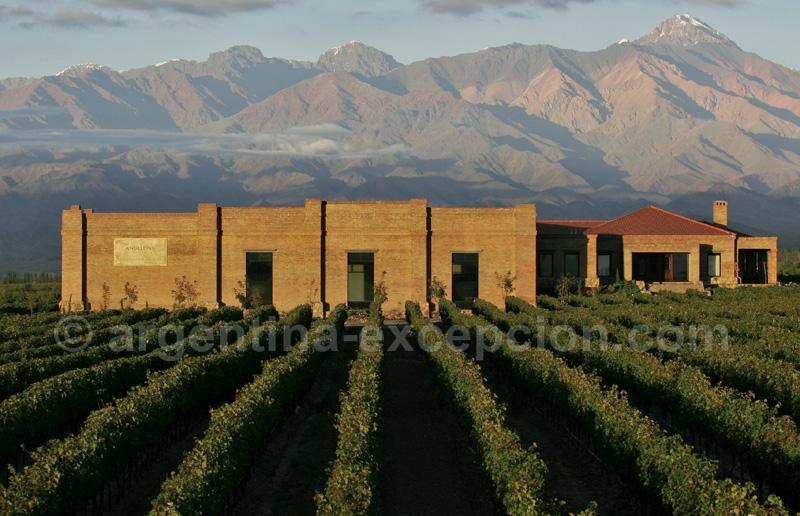Vignes à Mendoza