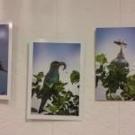 Exposition photo «Savane» à voir près de Grenoble