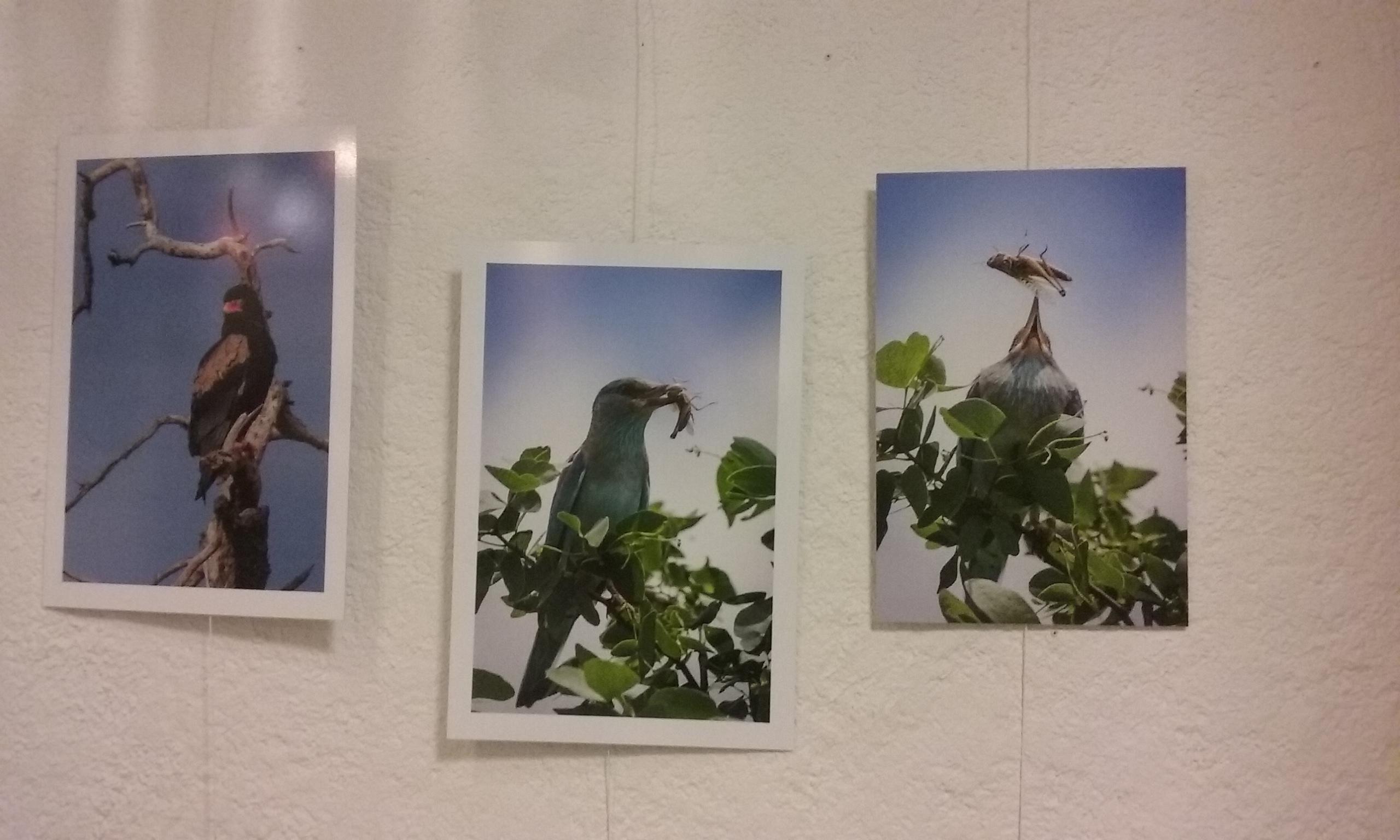 photo_oiseaux