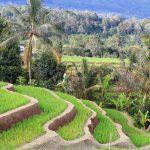 Voyager à Bali, que voir, que faire et quand partir ?