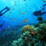 8 spots de plongée incontournables en France, en Europe et dans le monde