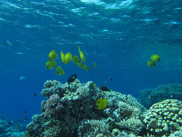 Plongée dans la Mer Rouge en Egypte
