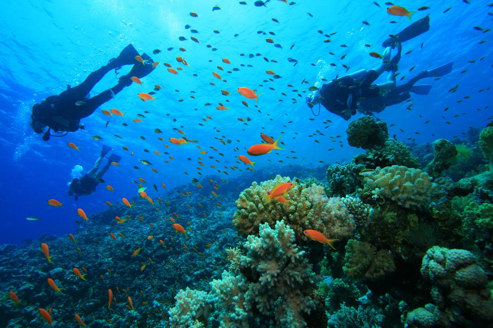 Faire de la plongée en vacances