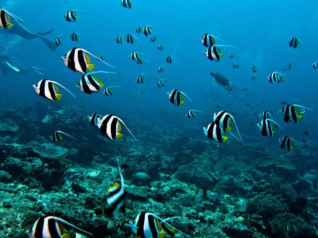 Vie sous-marine à Bali en Indonésie