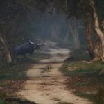 Escapades sauvages en Inde