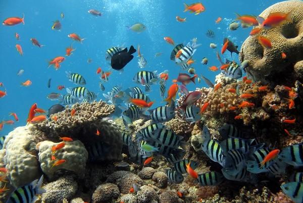 Les fonds marins de La Réunion