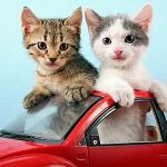 Conseils pour voyager en voiture avec un animal (chat / chien)