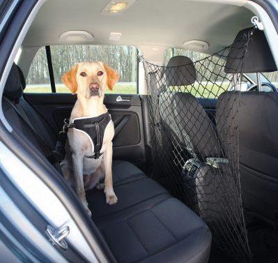 Un chien attaché en voiture = sécurité !