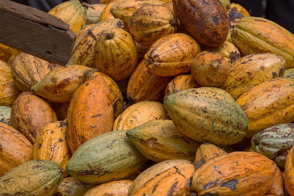 Cacao - Ferme La Loma