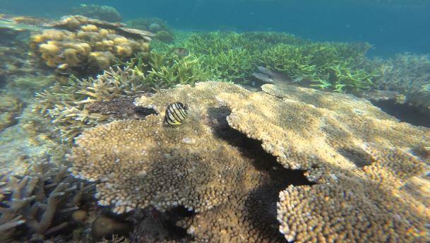 Plongée dans les îles autour de Coron aux Philippines