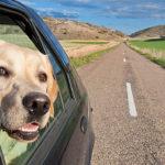 Conseils pratiques pour voyager avec son chien ou son chat